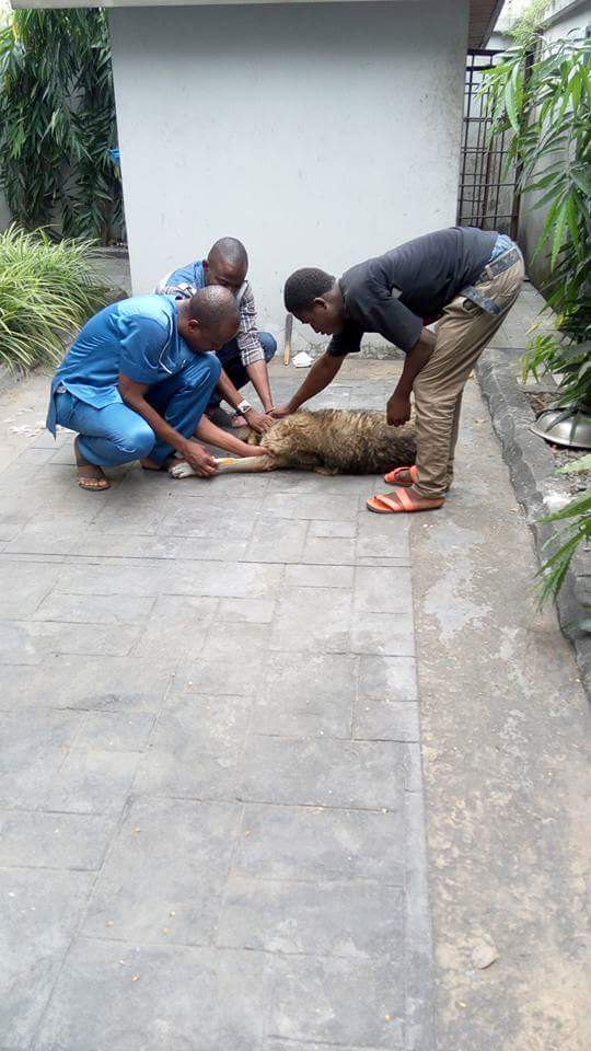 Nigerian Man Has Been Left Heartbroken After He Decided To Put 14-Year-Old Dog Out Of Its Misery To Avoid It Being 'Turned Into A Pot Of Pepper Soup'