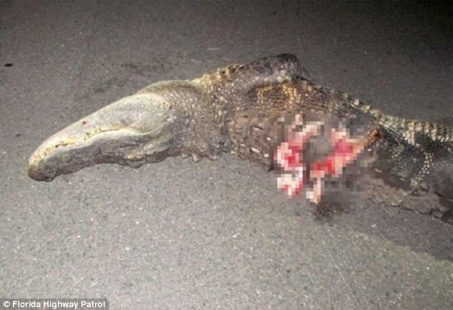 Calun Nelson Has Survived After Being Thrown Off Bike After Hitting 10-Foot-Long Gator 2