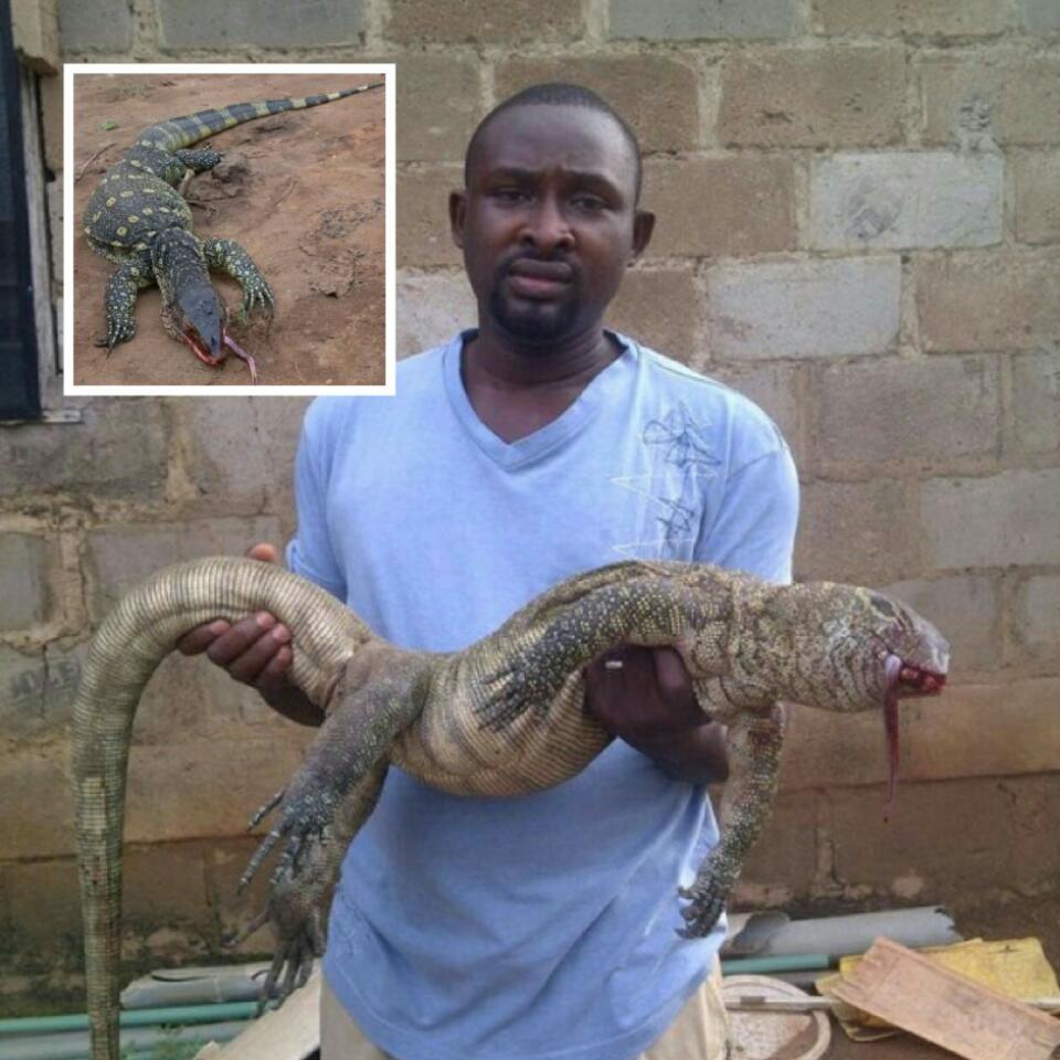 Big Monitor Lizard Killed In A Fish Farm