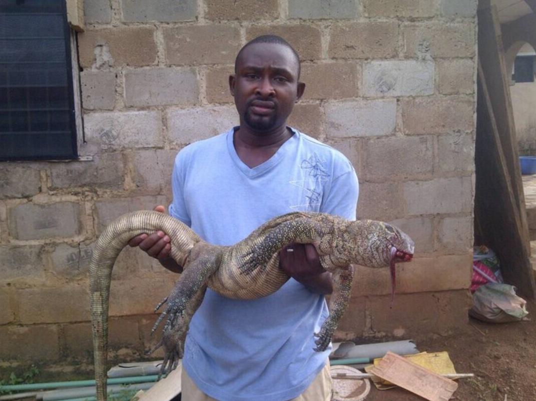 Big Monitor Lizard Killed In A Fish Farm 1