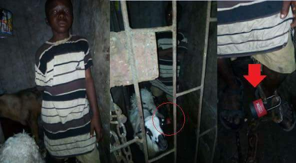 Houseboy Chained And Locked Up In Cage With Goats In Lagos (1)