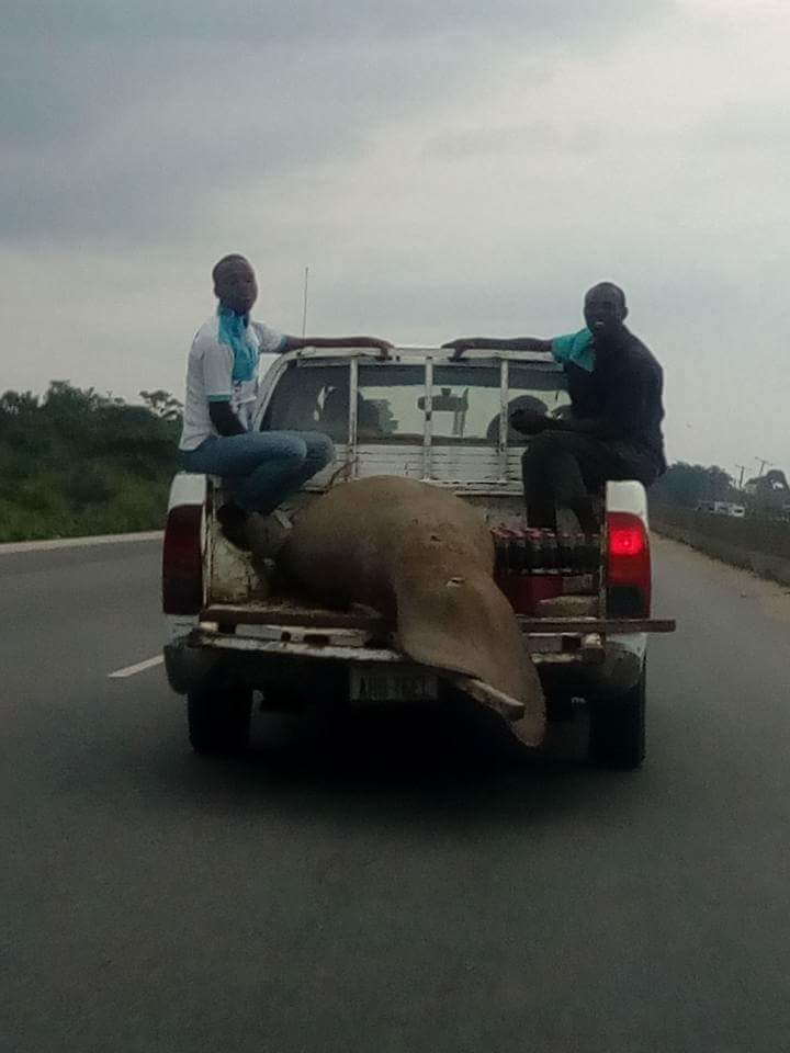 Giant Fish Port Harcourt Resident Spotted