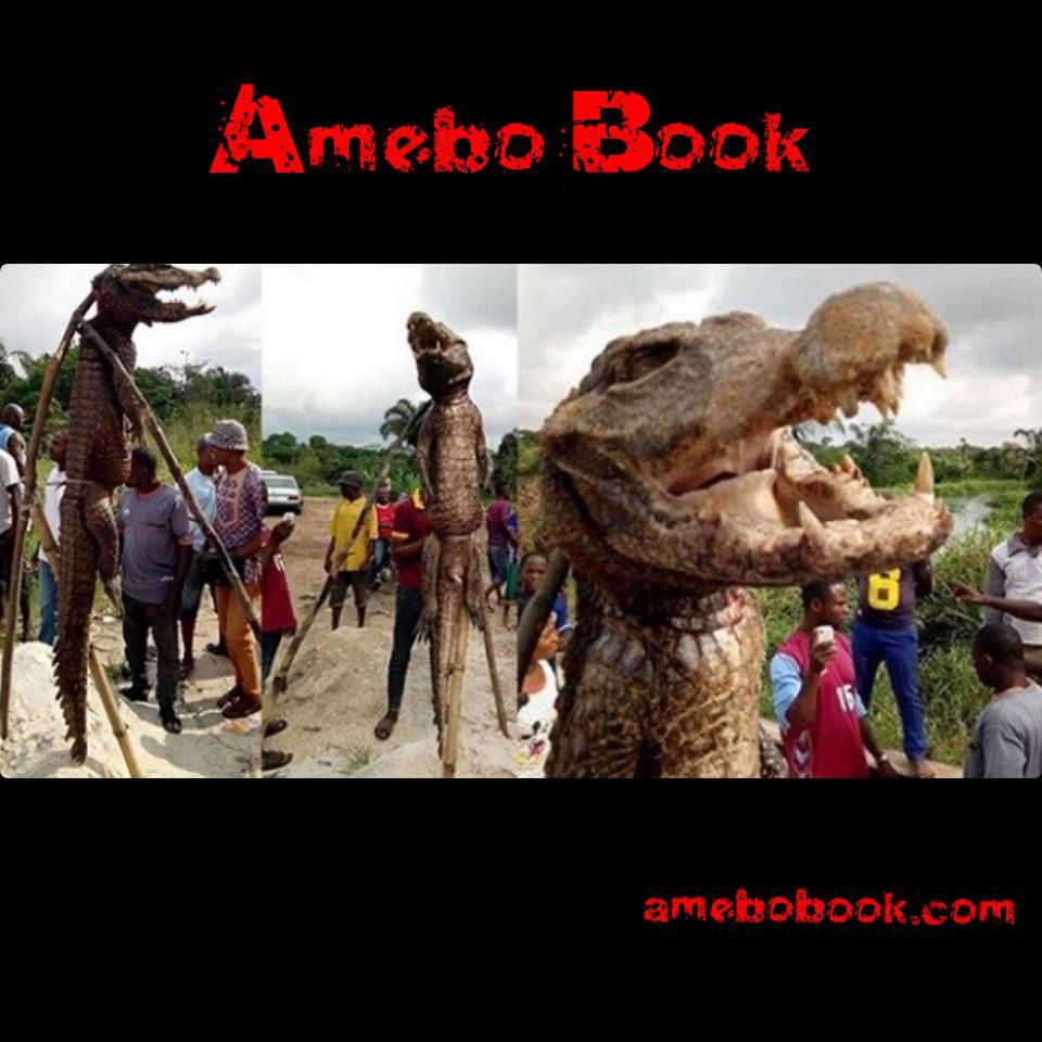 Monster Crocodile That Was Captured And Killed Inside The Ota-mmiri River In Ihiagwa