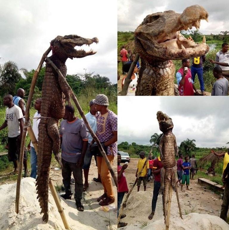 Monster Crocodile That Was Captured And Killed Inside The Ota-mmiri River In Ihiagwa (2)
