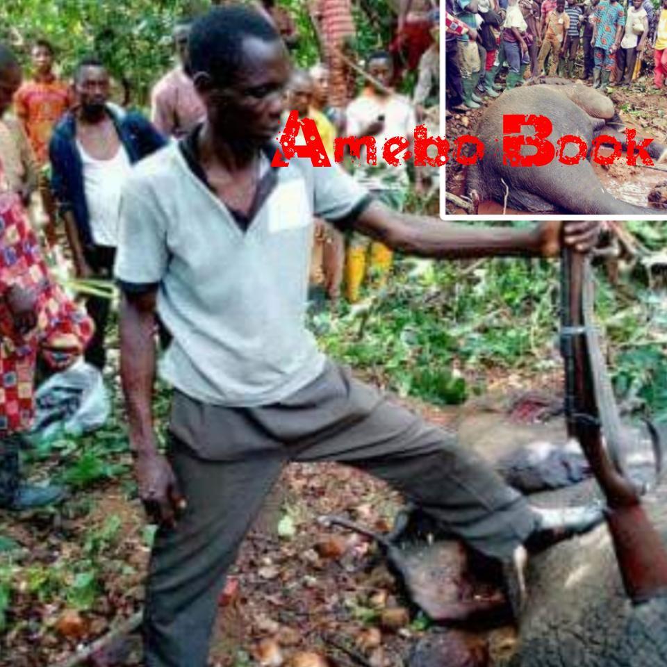 Hunter Kills An Elephant At Janiyi Camp