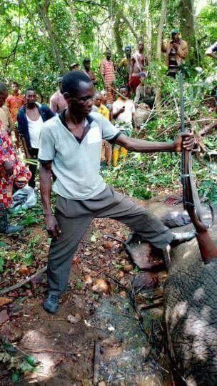 Hunter Kills An Elephant At Janiyi Camp (4)