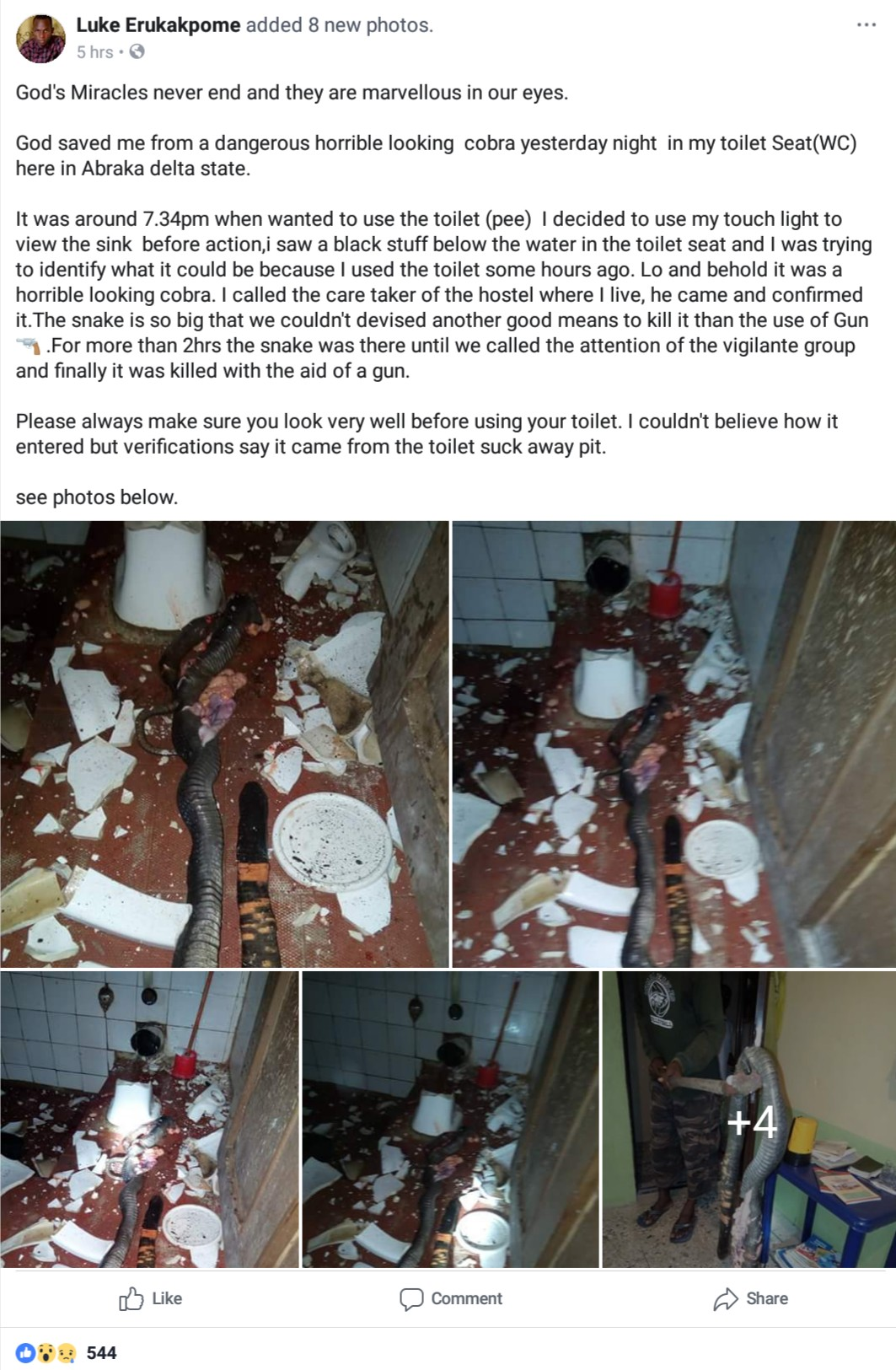 Man Narrates How Massive Cobra Was Killed In His Water Closet In Delta State (6)