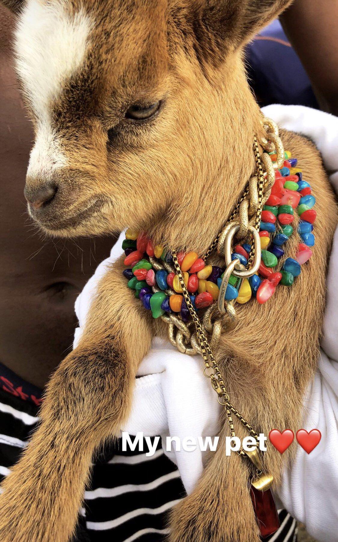 Wizkid Unveils Goat As His New Pet (2)