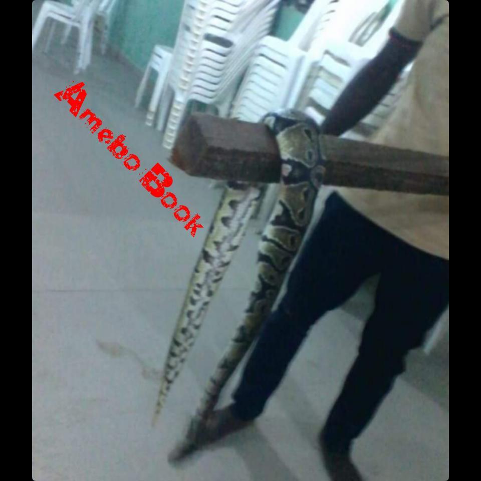 Churchgoer Displays Large Python Killed In Church