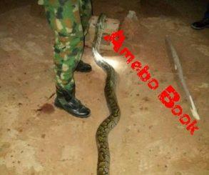 Nigerian Soldier Kills And Cooks Huge Python That Bit Him