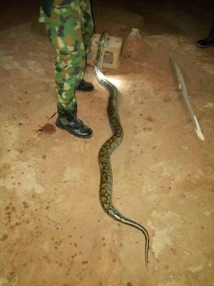 Nigerian Soldier Kills And Cooks Huge Python That Bit Him (2)