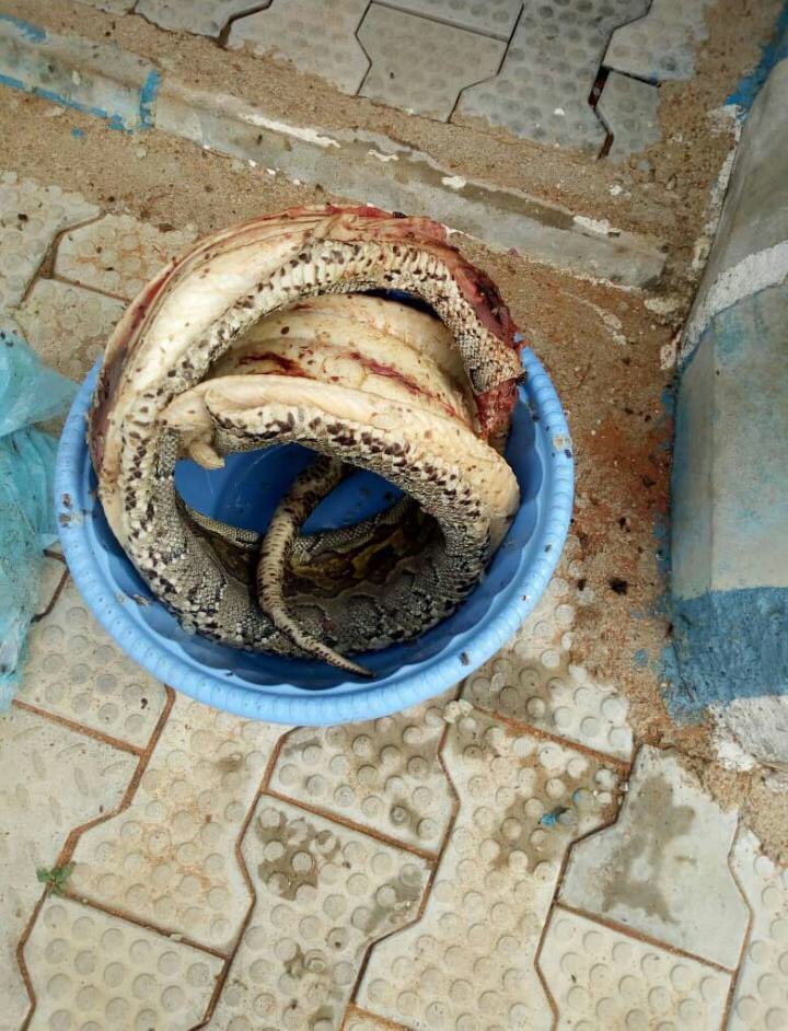 Nigerian Soldier Kills And Cooks Huge Python That Bit Him (3)
